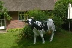Aussen-Kuh